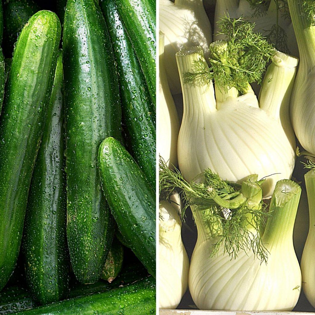 Gemüse für Hunde - Teil 2
