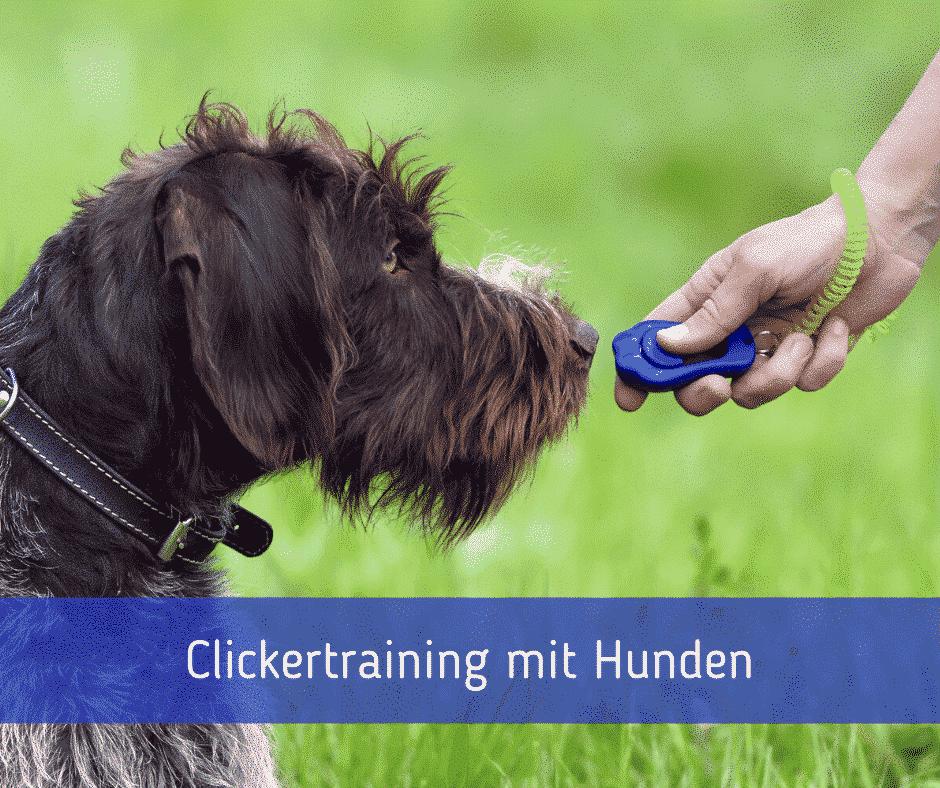 Clickertraining mit Hunden